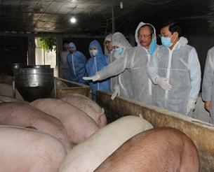 Bộ Nông nghiệp đề nghị các địa phương vào cuộc kiểm soát giá thịt lợn