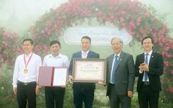 Thung lũng hoa hồng lớn nhất Việt Nam tại Sun World Fansipan Legend khủng cỡ nào