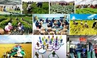 Tổ chức Diễn đàn kinh tế hợp tác, hợp tác xã
