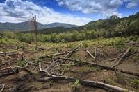 Tham nhũng làm trầm trọng thêm cuộc khủng hoảng khí hậu ở Indonesia