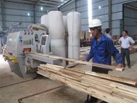 Xác minh việc áp dụng mã HS đối với gỗ cao su xuất khẩu dạng tấm