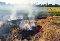 Hà Nội ra chỉ thị kiểm soát đốt rơm rạ để giảm đỉnh ô nhiễm không khí