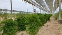 Nông dân Ninh Thuân tiếp tục kêu cứu vì điện mặt trời áp mái