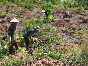 Buông lỏng quản lý, sử dụng đất không đúng mục đích đất có nguồn gốc từ nông, lâm trường