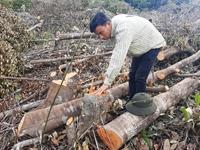 Thủ tướng chỉ đạo kiểm tra, xử lý vụ phá rừng xã Suối Tân