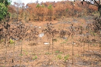 Nhiều sai phạm tại dự án trồng rừng của Công ty TNHH Linh Quý