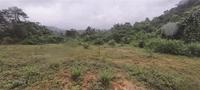"""Nhiều sở cùng """"gánh"""" trách nhiệm về sai phạm tại dự án trồng rừng của HTX Ngàn Hoa"""