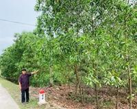 Ông Chửng đã đồng ý nhận đất và tiền hỗ trợ