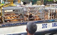 Phát hiện và thu giữ 16 con hổ nuôi nhốt trong nhà dân
