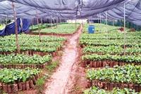 Đồng Nai Dừng thanh tra hoạt động sản xuất, kinh doanh giống cây trồng